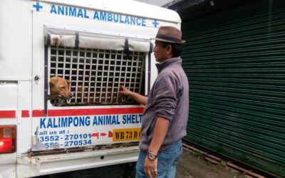 Animal Birth Control in Kurseong ,2019