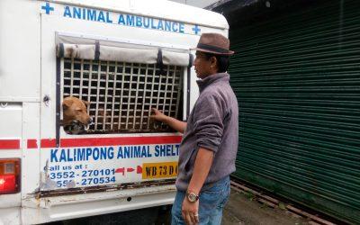 Animal Birth Control in Kurseong ,2019