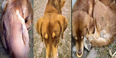 Rescue of the other stray girl from Darjeeling